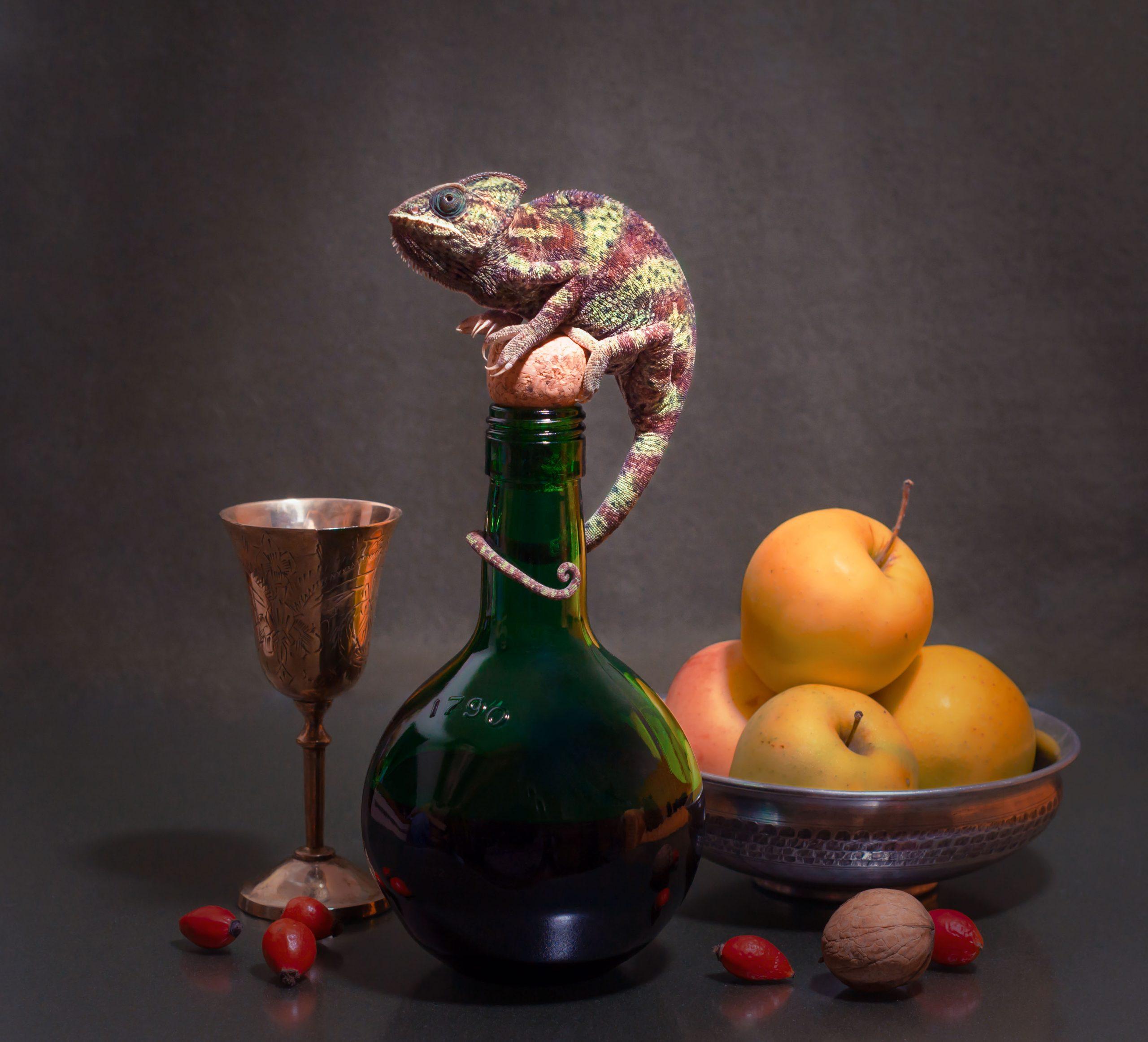 Фото с рептилиями Мариуполь
