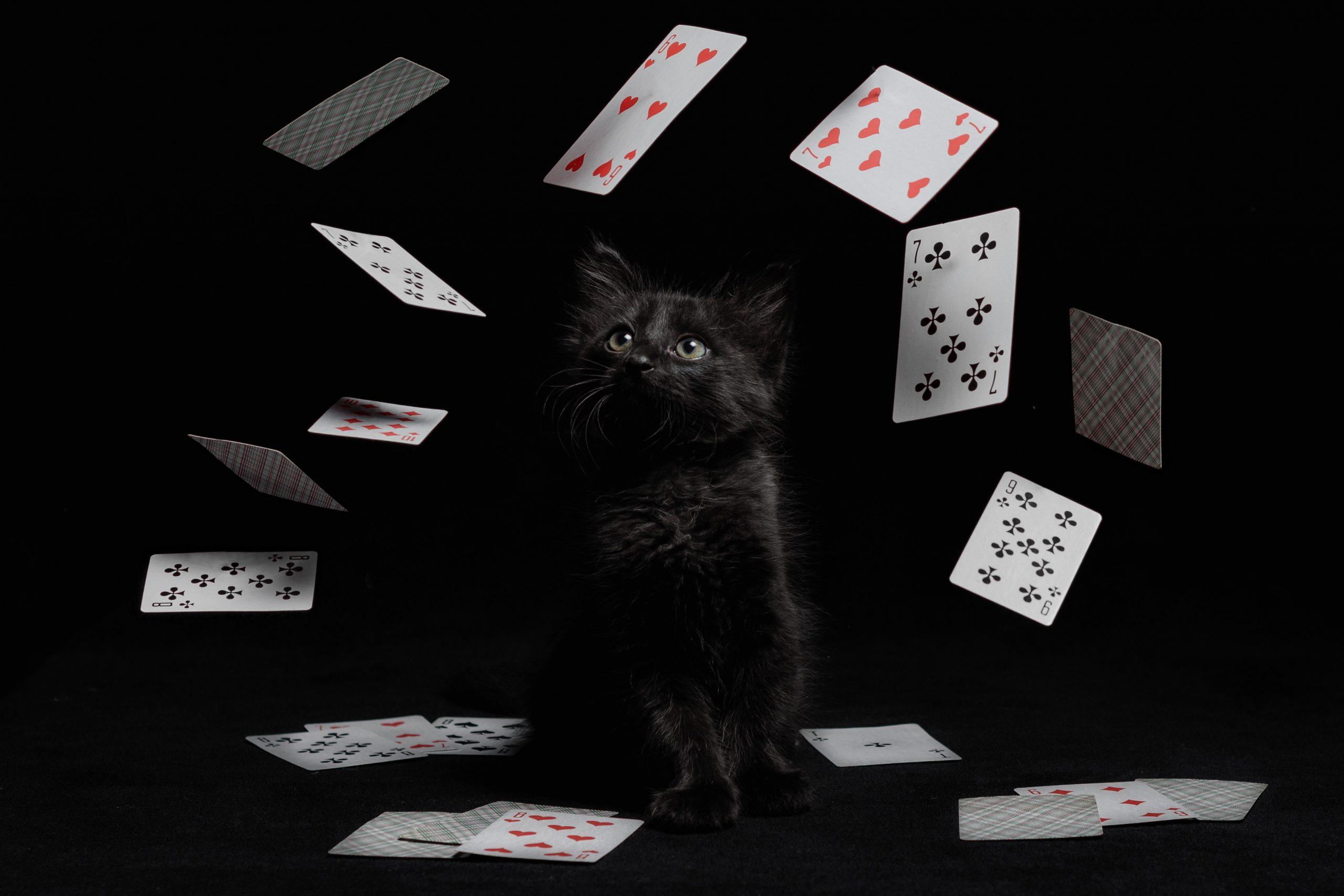 Коллажи для питомников кошек Мариуполь