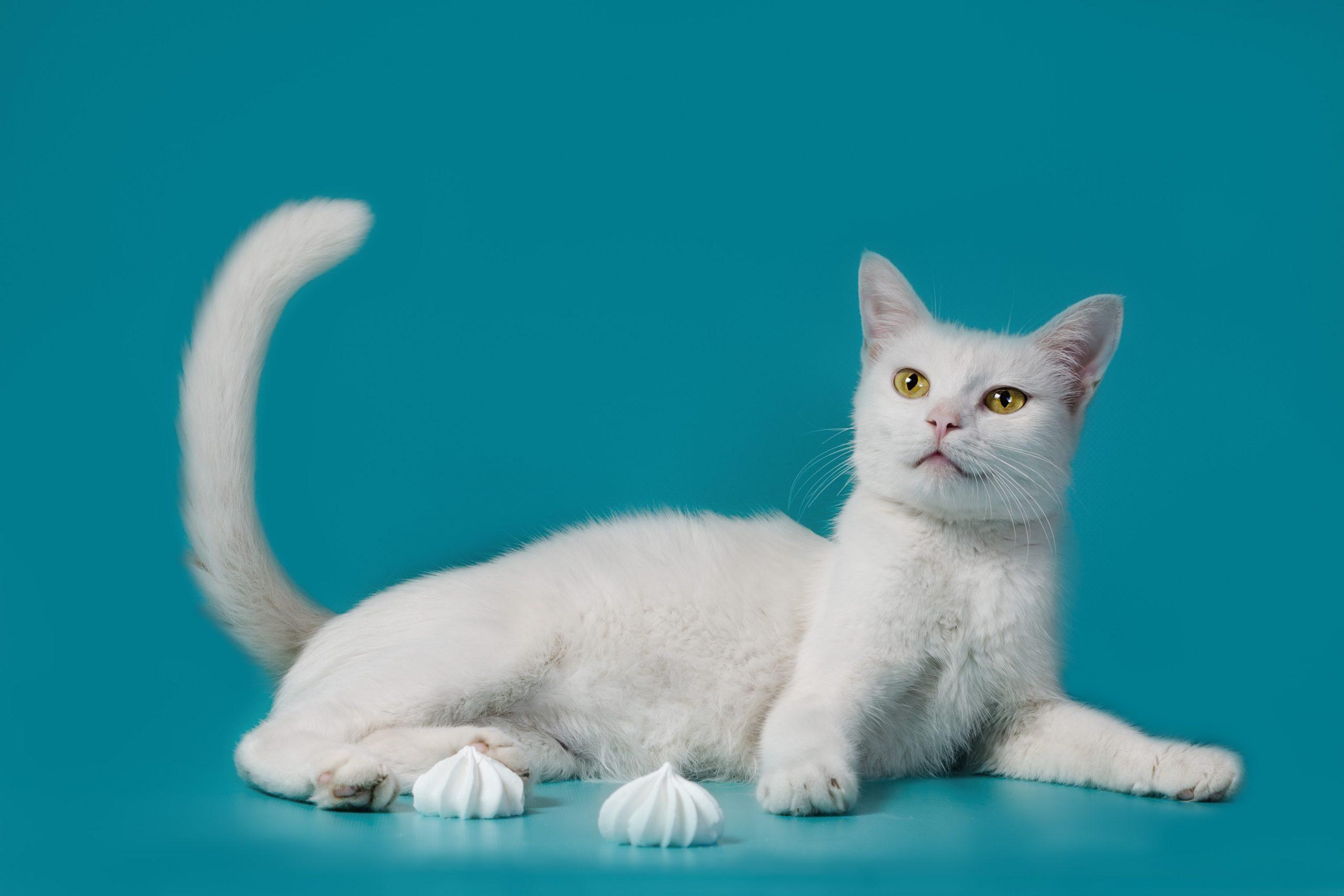 Фотосессии для животных