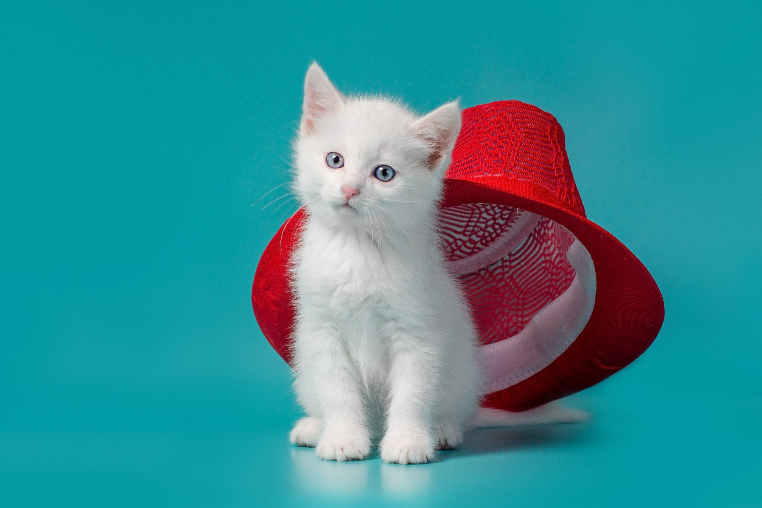 Фотосессия для котёнка