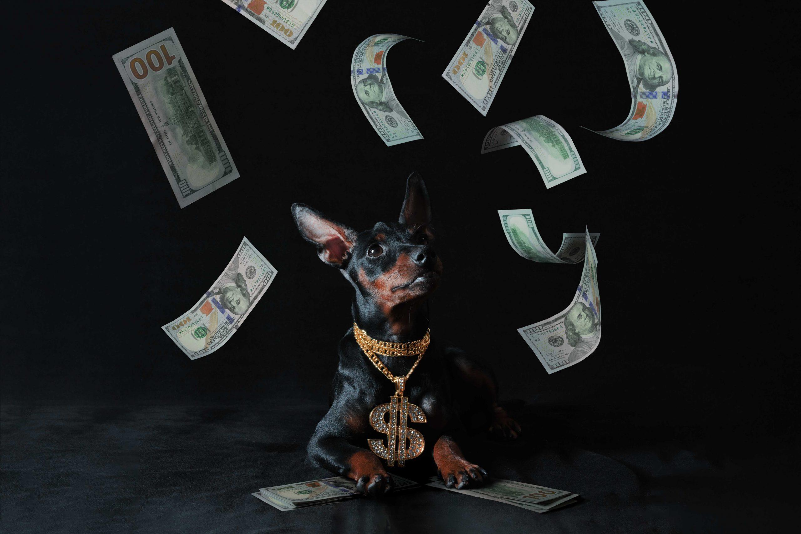 Коллаж с собакой Мариуполь