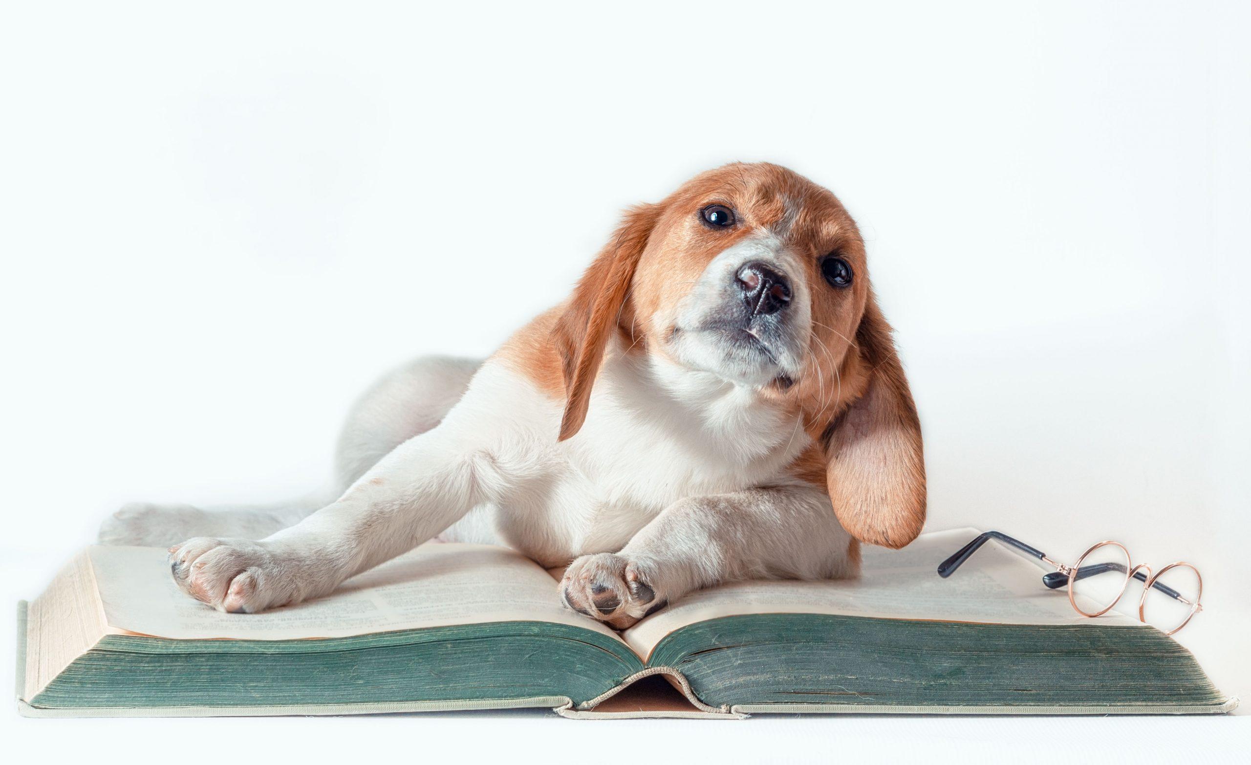 Фото щенка для продажи