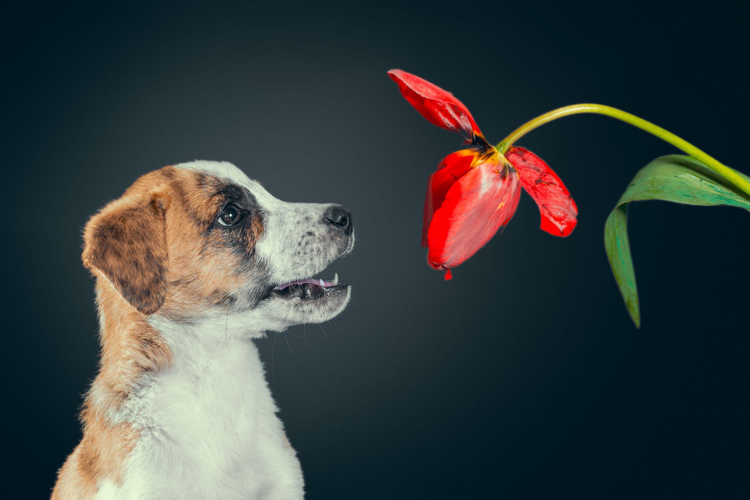 Фотограф собак Мариуполь