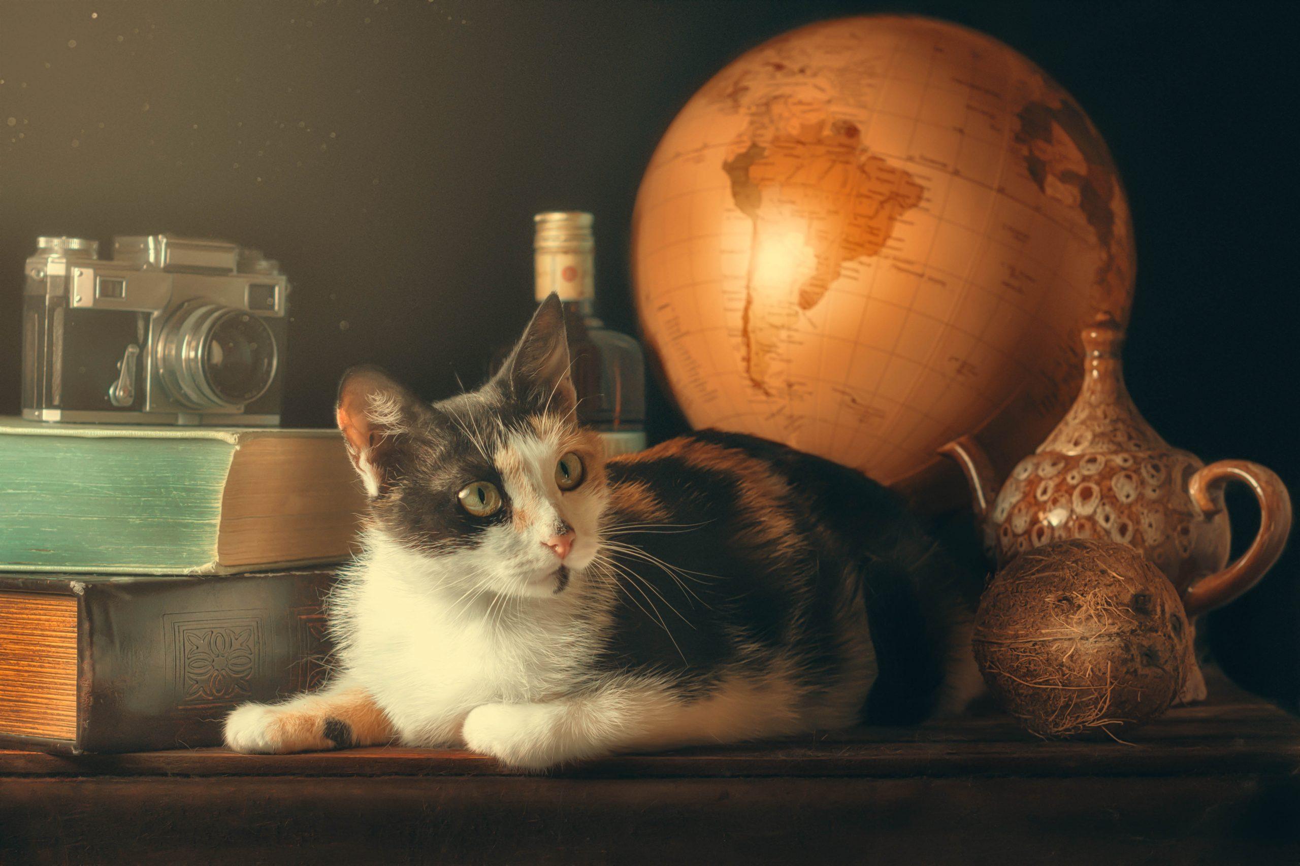 Фотограф кошек Мариуполь
