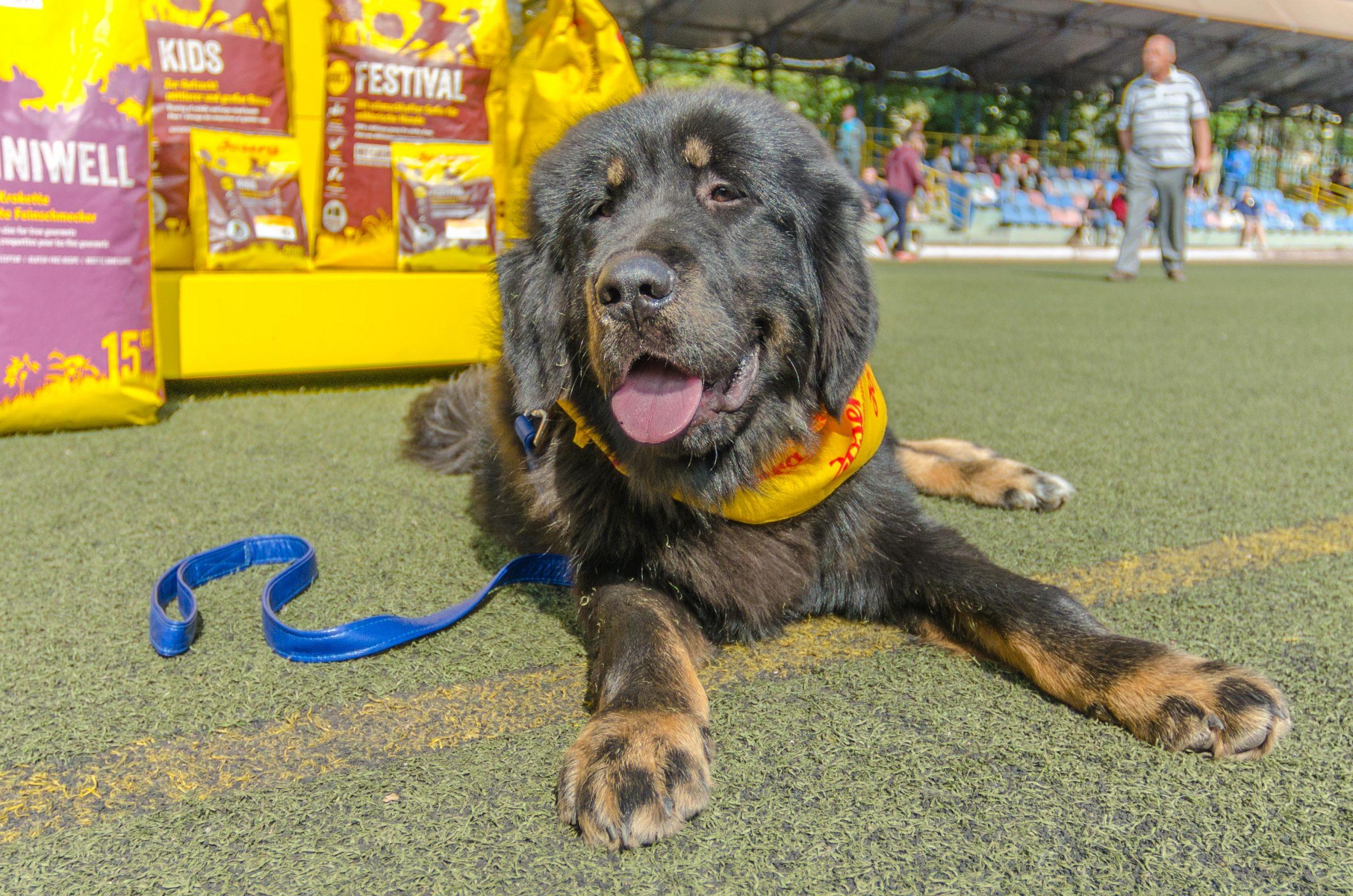 Фотосъемка собак на выставке Мариуполь