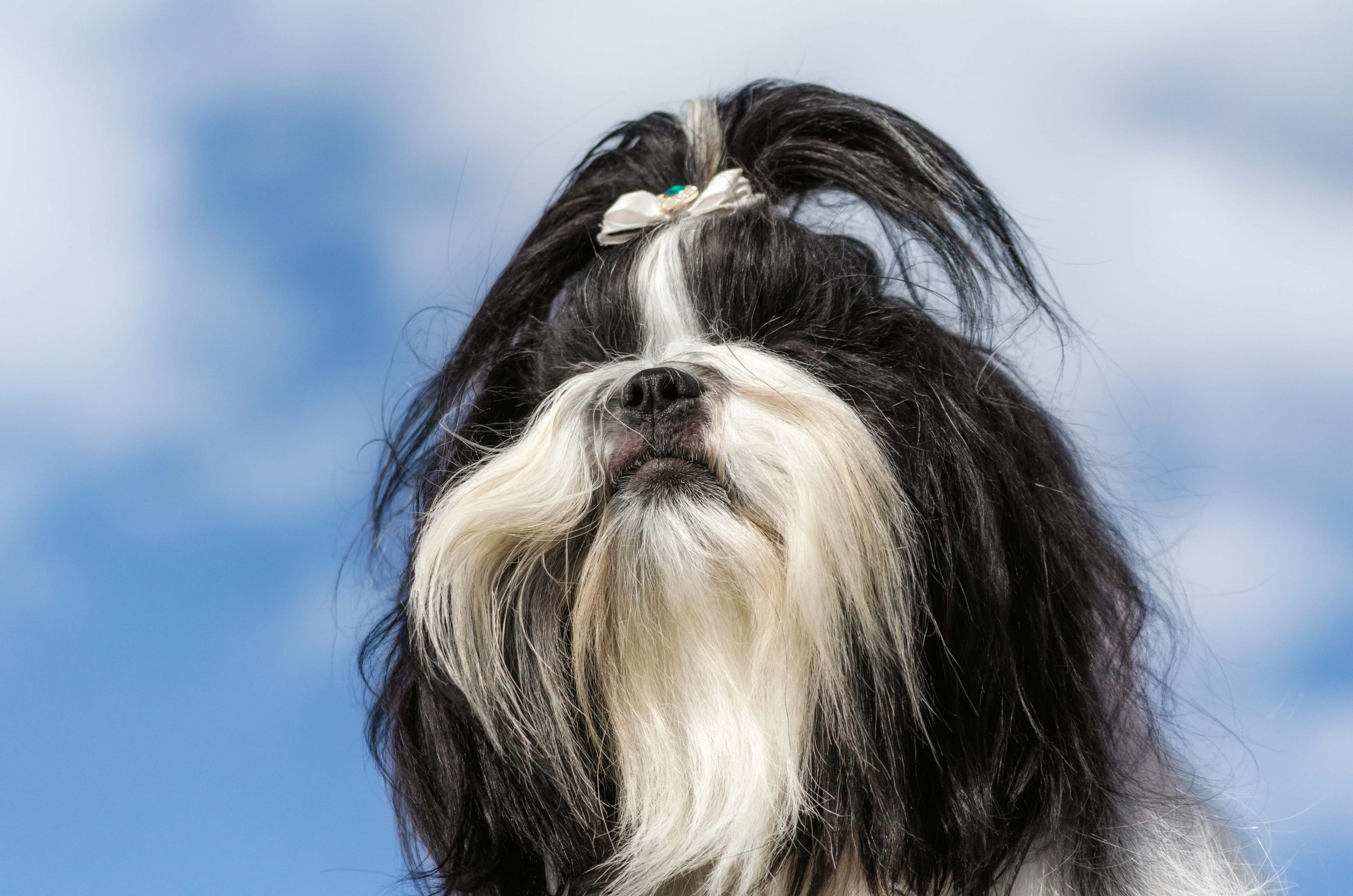 Фотограф на прогулке с собакой