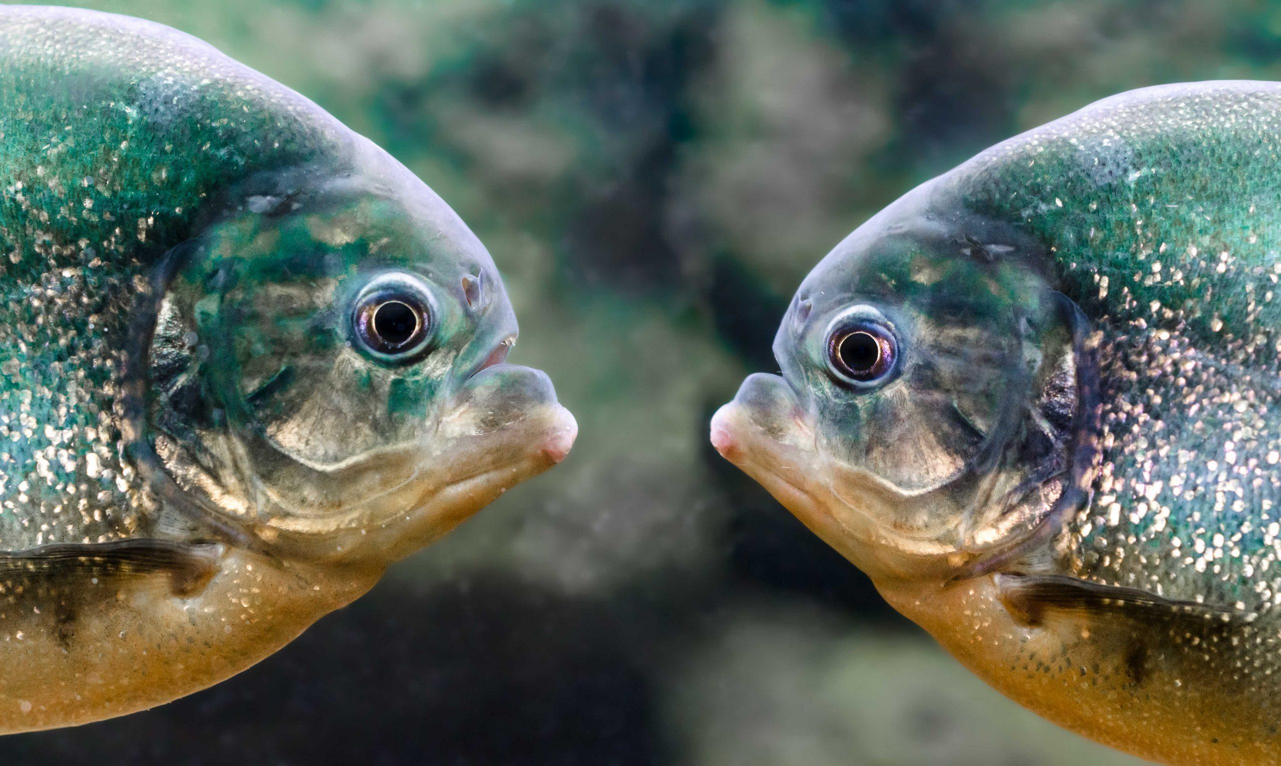Фотограф аквариумов Мариуполь